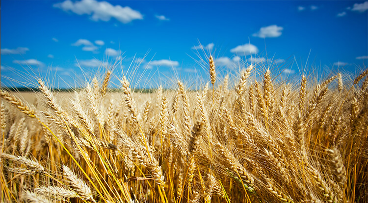 /en/invest-in-greece/sectors-for-growth/food-agriculture